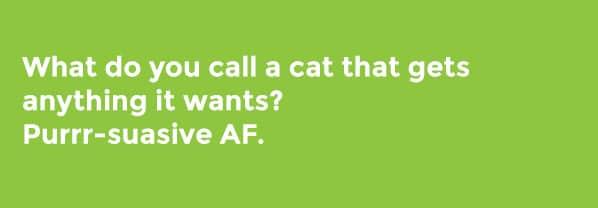 hello kitty cat puns