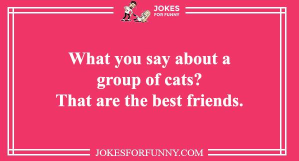 cat pun